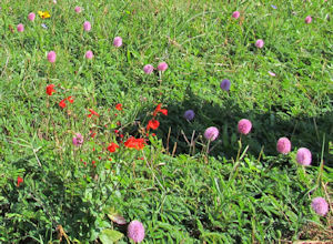 You pick: a grass lawn or a meadow of wild flowers