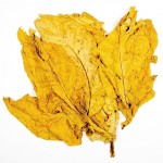 tobacco leaf