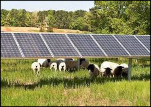 """Does mixing sheep with solar panels make a solar """"farm"""" an agricultural use?"""